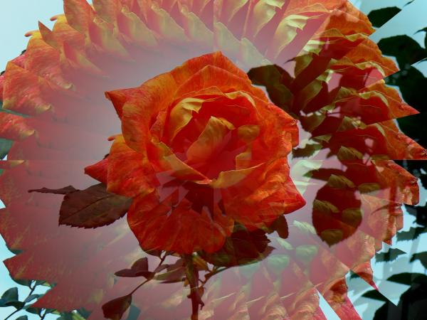 Rosa-al-caleidoscopio.jpg