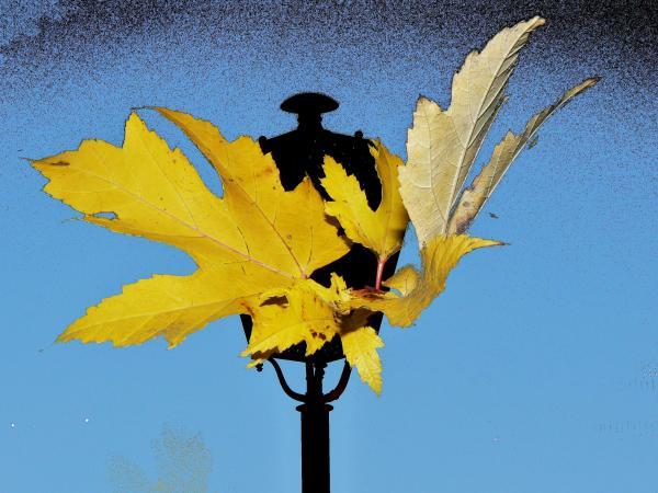 Il volo delle foglie